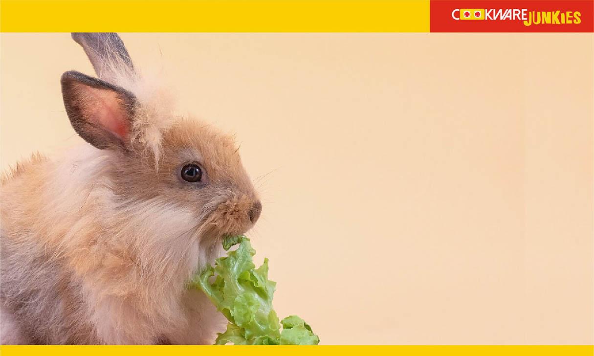 Cute Rabbit eating vegetable